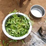 eine schüssel voll neem-blätter, mit wasser aufgegossen